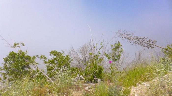 Mist, Sun & Color